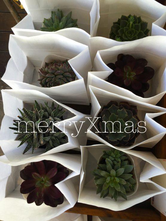 皆様、merry Xmas ♪♪ 今年のHUNCHからのXmasプレゼントは植物or organic soap でした♪ 来年も企画致しますので楽しみにしていて下さい♪ それでは素敵なXmasをお過ごし下さい♪